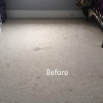 Bedroom-Wall-to-Wall-Carpet-Cleaning-San-Leandro-A