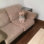 San-Leandro-Sofa-Pet-Stain-Cleaning