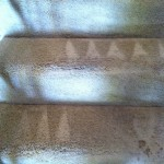 San-Leandro-Stairs-Carpet-Cleaning